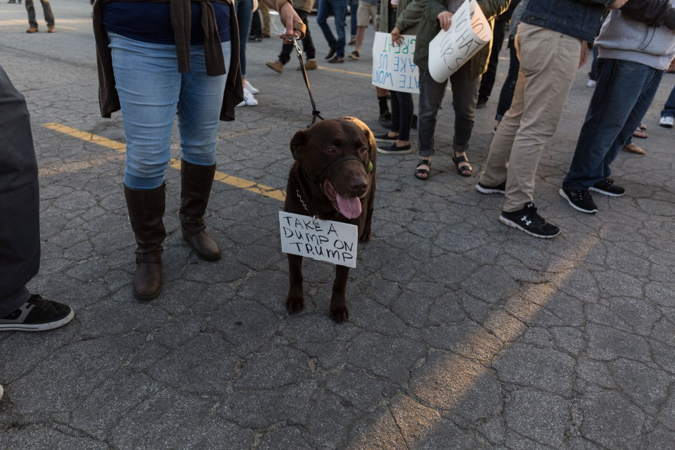 A dog wears a sign that says Take a Dump on Trump at the Donald Trump rally in Costa Mesa, CA.